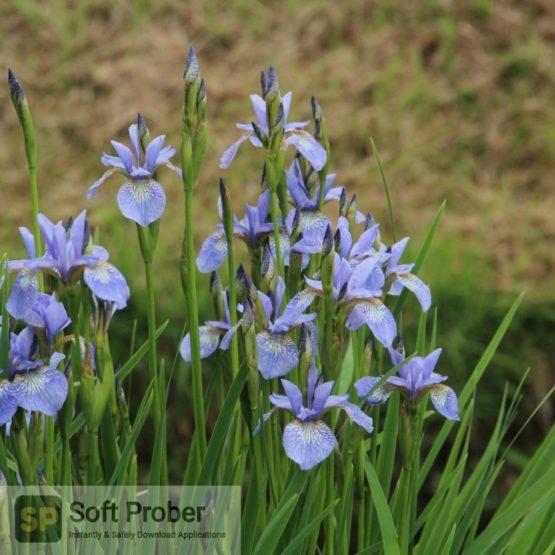 Blue Iris 2021 Direct Link Download-Softprober.com