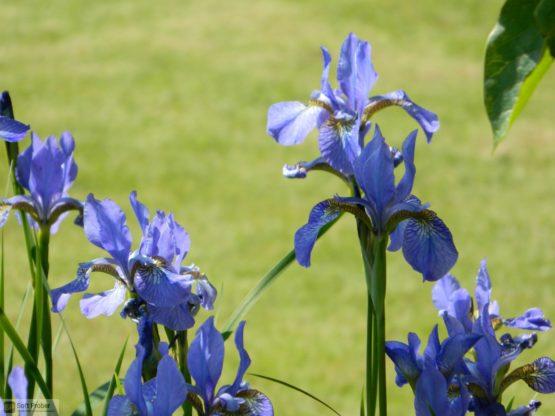 Blue Iris 2021 Offline Installer Download-Softprober.com
